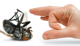 We are the local experts in pest control kwinana
