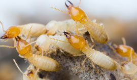 For quality termite inspections call ultra V pest control